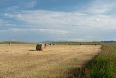 有草的干草捆与干布朗花 库存照片