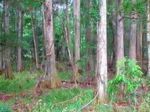 有草的森林 免版税库存图片