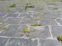 有草的石路 库存照片
