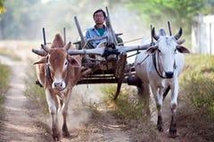 有草稿的鞔具的缅甸农民 库存照片
