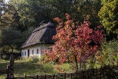 有荚莲属的植物的乌克兰房子 库存图片