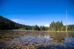 有荷花和多雪的山的Trillium美丽如画的湖 免版税库存照片