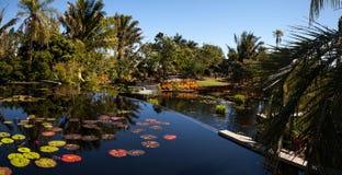 有荷花和植物的反射性池塘在那不勒斯Botan 图库摄影