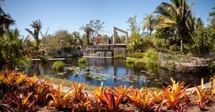 有荷花和植物的反射性池塘在那不勒斯Botan 库存图片
