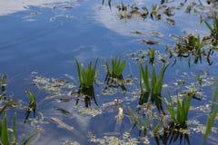 有荷花和纸莎草植物的湖,钓鱼地方,筑成池塘与大海,湖旅行背景,自然风景 免版税库存图片