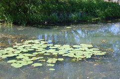 有荷花的池塘在公园 免版税库存图片
