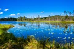 有荷花的湖 免版税库存照片