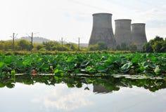 有莲花叶子的湖 图库摄影