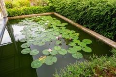 有莲花的池塘 库存照片