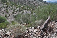 有菲尼斯的亚利桑那梦想的凹道绿色沙漠 图库摄影