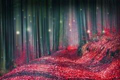 有萤火虫光的不可思议的童话森林 库存照片