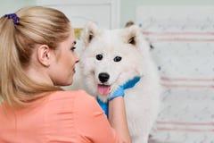 有萨莫耶特人的微笑的兽医 免版税图库摄影