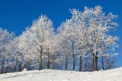 有落叶树的斯诺伊森林 库存照片