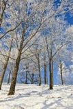 有落叶树的斯诺伊森林 免版税库存图片