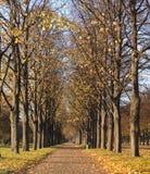 有落的叶子的一条美丽的路 库存照片