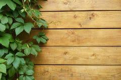 有葡萄叶子的木墙壁 免版税库存照片