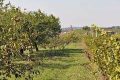 有葡萄园和果树的农村地中海庭院 图库摄影