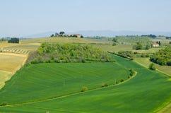 有葡萄园和领域的农场在托斯卡纳,意大利 库存图片