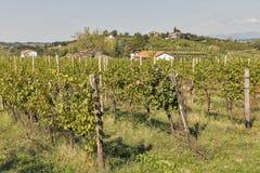 有葡萄园的农村地中海庭院 免版税库存图片