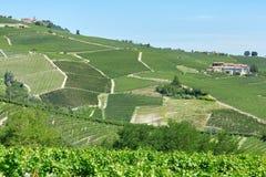 有葡萄园的绿色乡下山麓的,意大利 图库摄影