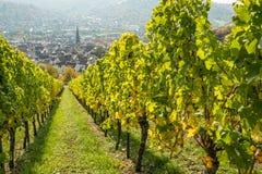 有葡萄园的酒村庄Geradstetten 库存图片