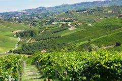 有葡萄园的, Langhe小山绿色乡下在意大利 免版税库存图片