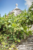 有葡萄树的Trullo房子 免版税图库摄影