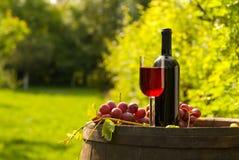 有葡萄酒杯和葡萄的红葡萄酒瓶在葡萄园里 免版税图库摄影