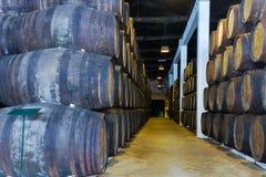 有葡萄酒桶的地窖 库存图片