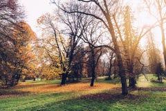 有葡萄酒神色的秋天公园 库存图片