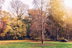 有葡萄酒神色的秋天公园 免版税图库摄影