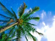 有蓝天和云彩的美丽的海滩棕榈 免版税库存图片