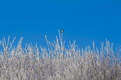 有蓝天和多雪的树枝的白色冬天森林 库存图片