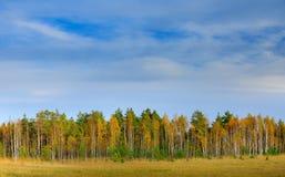 有蓝天和白色云彩的秋天森林 在芬兰森林秋天的秋天树环境美化与树 与杉木的桦树 免版税图库摄影