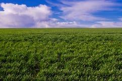 有蓝天的原始农田 免版税库存照片