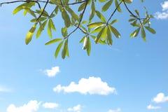 有蓝天的叶子 免版税库存图片