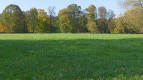 有蓝天的秋天风景被染黄的森林 免版税图库摄影