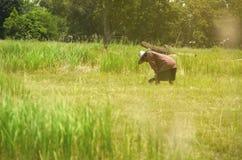 有蓝天的绿色草甸 图库摄影