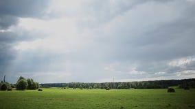 有蓝天的美丽的绿色草甸在一个明亮的晴天 股票录像
