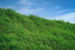 有蓝天的草原在夏季,背景材料 图库摄影