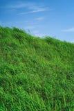 有蓝天的草原在夏季,背景材料 库存照片