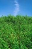 有蓝天的草原在夏季,背景材料 免版税库存照片