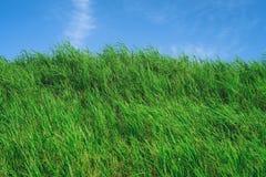 有蓝天的草原在夏季,背景材料 库存图片