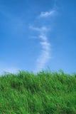 有蓝天的草原在夏季,背景材料 免版税库存图片