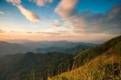 有蓝天的绿色森林 免版税库存照片
