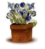 有蓝色郁金香花束的木箱  免版税库存照片