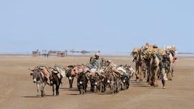 有蓬卡车埃赛俄比亚的盐 免版税图库摄影