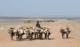 有蓬卡车埃赛俄比亚的盐 免版税库存图片