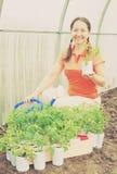 有蕃茄幼木的妇女 库存图片