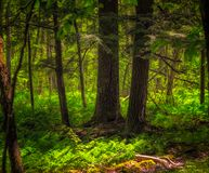 有蕨下木的森林在夏天 库存照片
